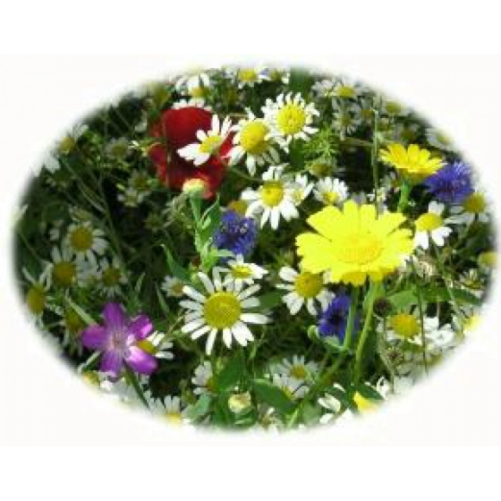 Small garden wildflower kit