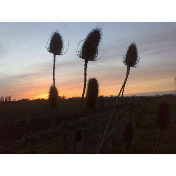 Attractive Seed Head Selection