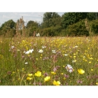 view details of Wet Soil Wildflowers- 100% wild flower seed mix
