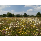 view details of Meadow Mix for Loam Soils -Wildflower and Grass seed Mix