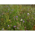 view Meadow Mix for Loam Soils -Wildflower and Grass seed Mix details