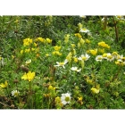 view details of Meadow seed mix for Wet Soils -Wildflower and Grass Mix