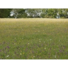 view details of Chalk and Limestone Meadow mix -Wildflower and Grass Mix