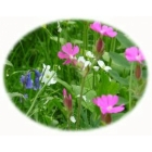 Large garden wildflower kit