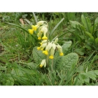 view details of Woodland Glade Bulb Collection (100 bulbs)