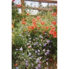 view details of Meadow mix for Clay Soils -Wildflower and Grass seed Mix