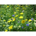 view details of Meadow seed mix for Fertile Soils -Wildflower and Grass Mix