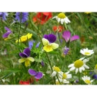 view details of Cornfield Annuals Seed Mix -STANDARD mix