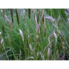 Clay and Loam Soil Meadow grass mix (100% Meadow Grass mix)