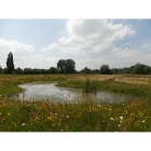 view details of Pond Edge Meadow grass mix (100% Meadow Grass mix)